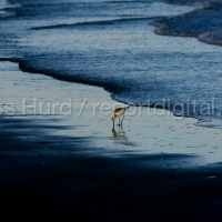 BP Gulf Oil Spill – Anniversary Photo Essay